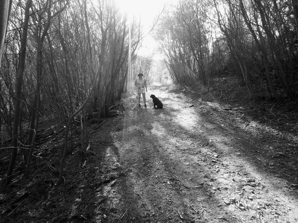 Photo in Black and White #hiking #black & white #massif-des-maures #var #france