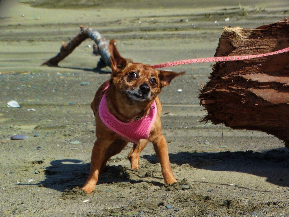 Photo in Animal #dog #pet #animal #shanetzu