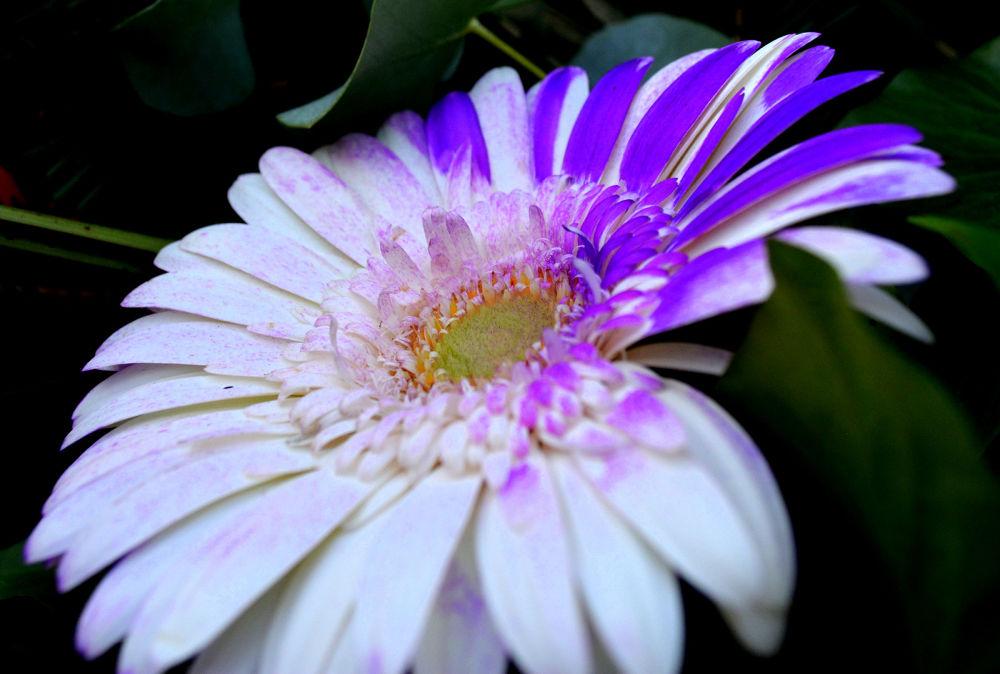 Photo in Nature #cvijeće