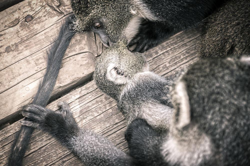 Photo in Nature #monkey #kiss #love #mother's love #africa #eknya #anirobi #animals #wildlife