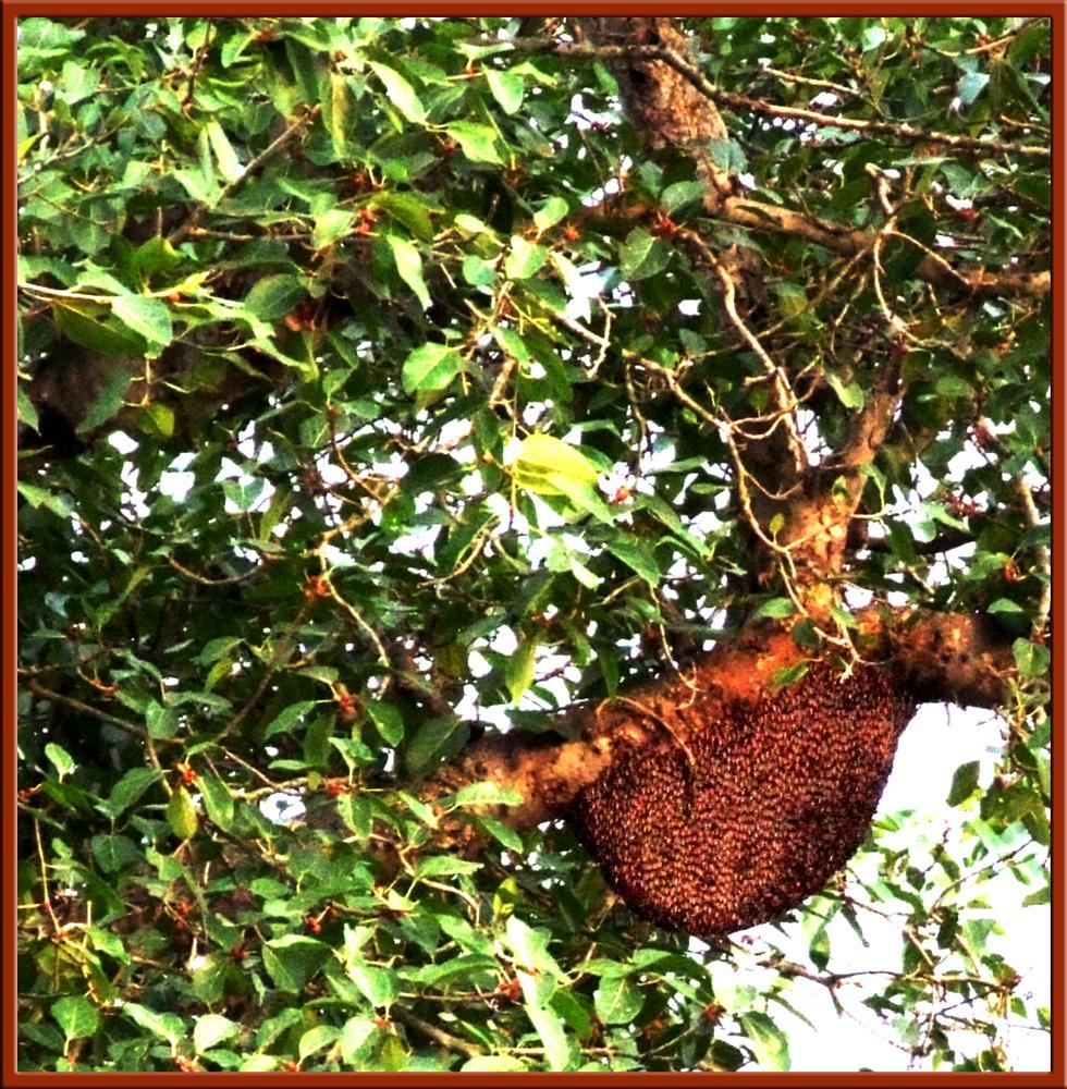 Photo in Nature #beehive #bee #tree