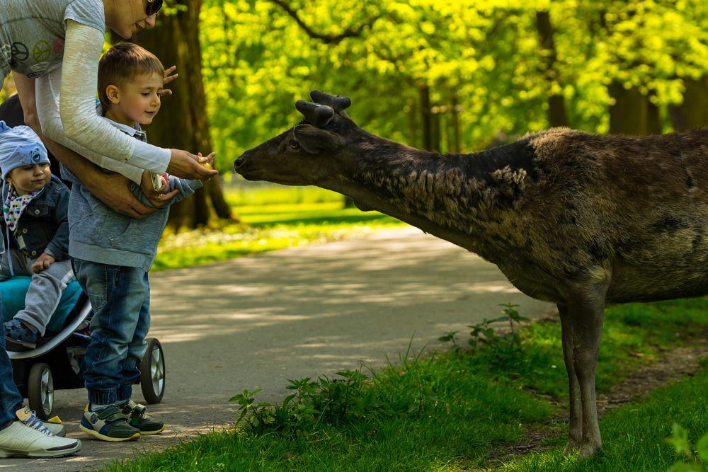 Photo in Animal #nature