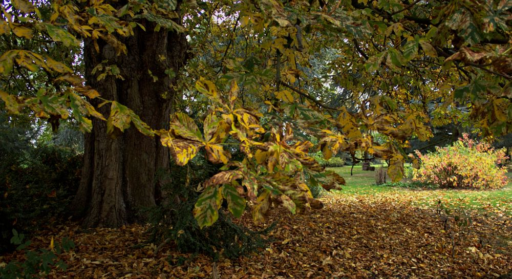 Photo in Landscape #park #autumn #trees #autumn leaves #leaves #landscape
