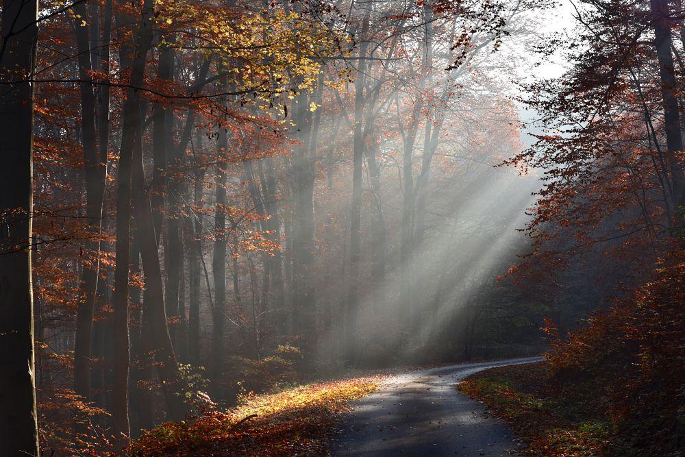 Photo in Nature #autumn #light #nature