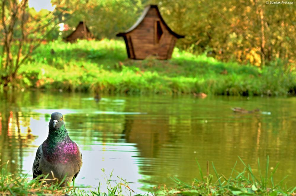 Photo in Nature #bird #park #lake