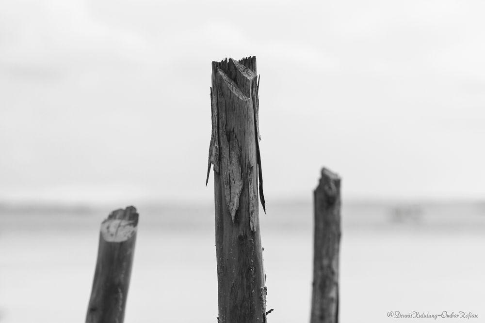 Photo in Black and White #blackandwhite #bnw #wood #art