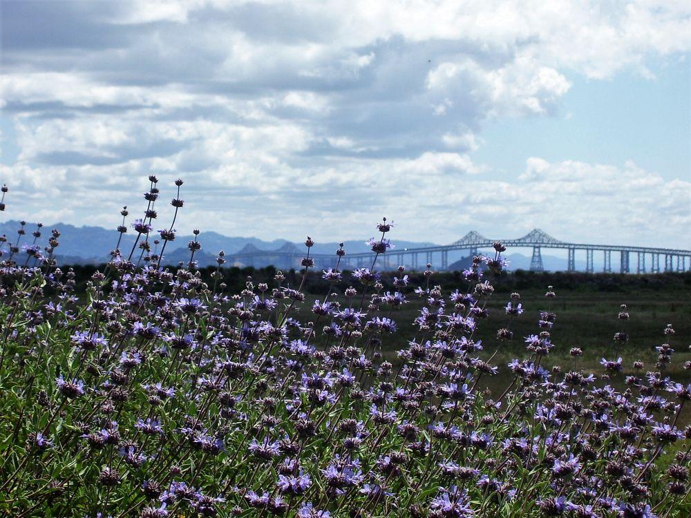 Photo in Fine Art #wild flowers #bay #water #california