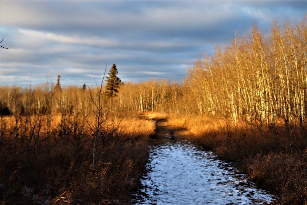 Photo in Random #trees sun snow sky https://