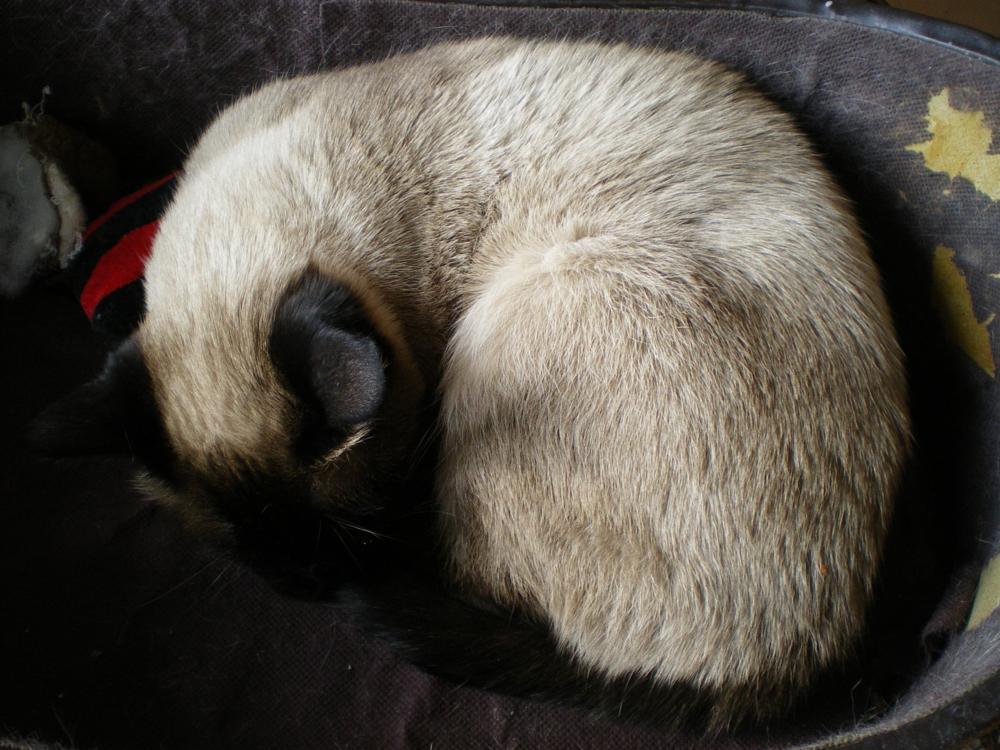 Photo in Animal #cat #animal #sleeping