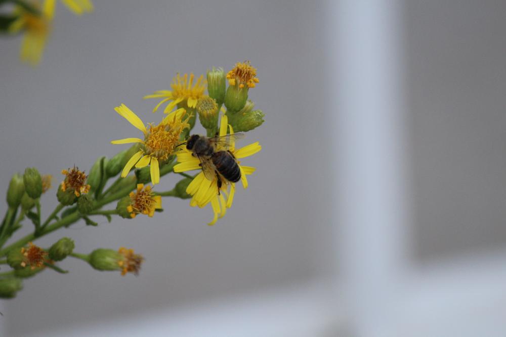 Photo in Nature #abeille #bee #fleur #flower