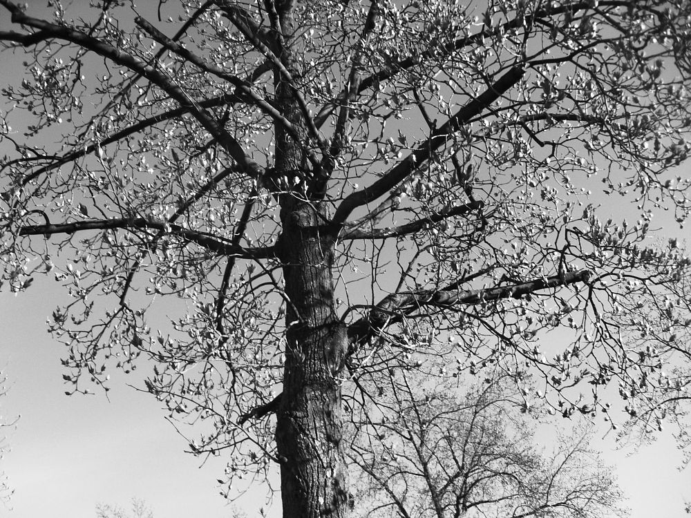 Photo in Black and White #tree #black and white photography #flying