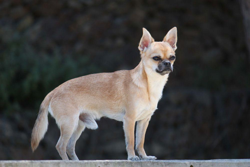 Photo in Animal #https://www.facebook.com/vasco