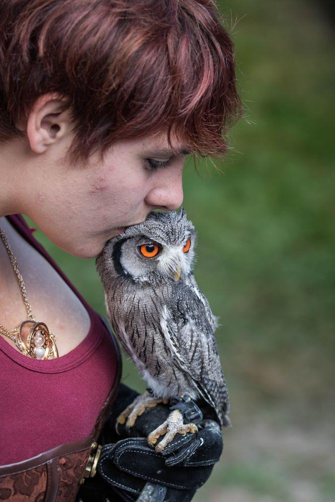 Photo in Animal #bird #raptor #little white duck owl