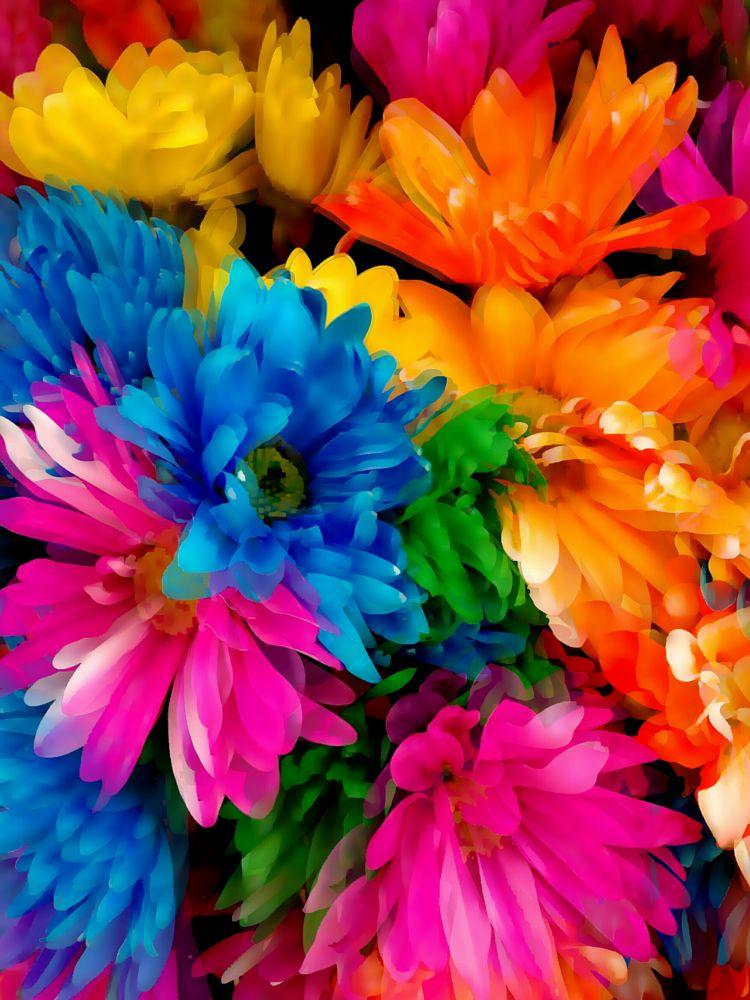 Photo in Fine Art #rainbow #flowers #colours #flower #beautiful #art