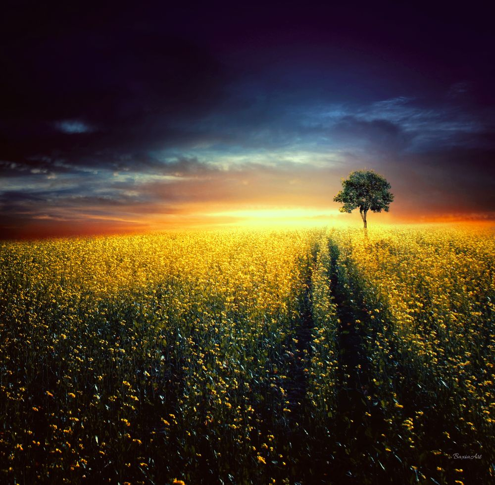 Photo in Fine Art #tree #susnet #scenery #lands #baxiaart #fineart #art #cool #poland #summer #magical #magic #mood #moody #golden #abstarct #sun #landscape #photoart #photomanipulation #digital