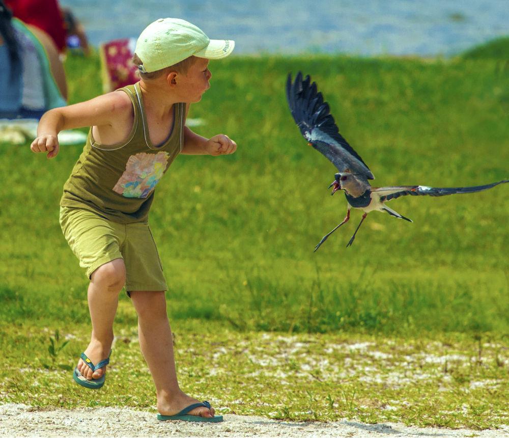 Photo in Portrait #portrait #correndo do pássaro