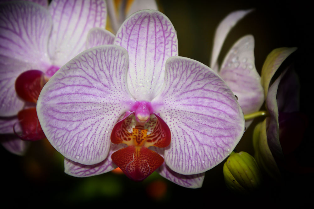 Photo in Nature #flower #nature #flowers #flora #floral #cuba #orchid #plants #orchids #wildflower #wildflowers #pinar del rio