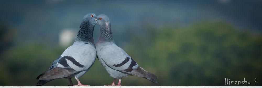 Photo in Random #love birds