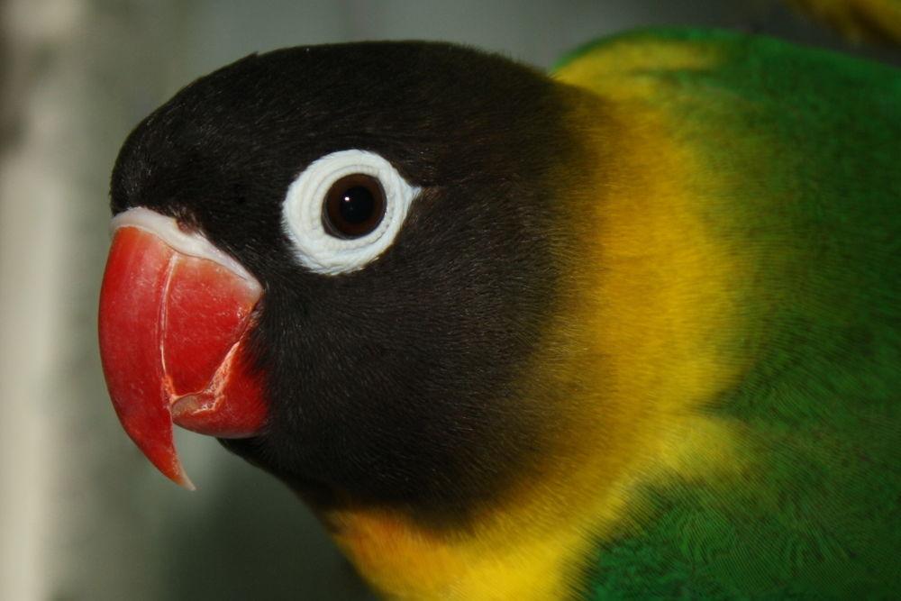 Photo in Animal #animal #bird #birds #wildlife #animals