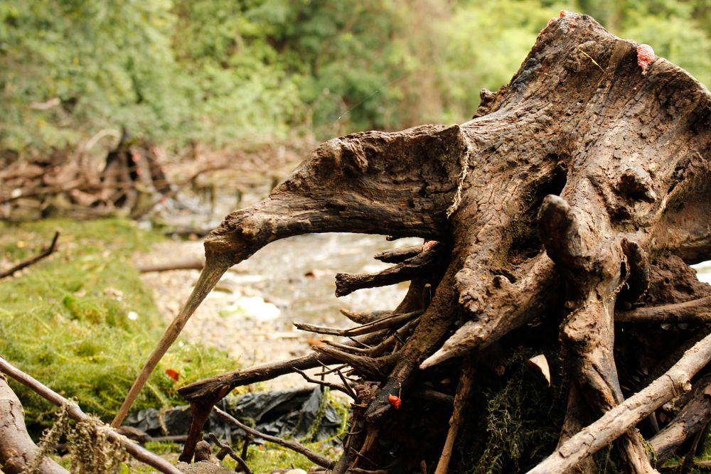 Photo in Nature #nature #árvore #rio