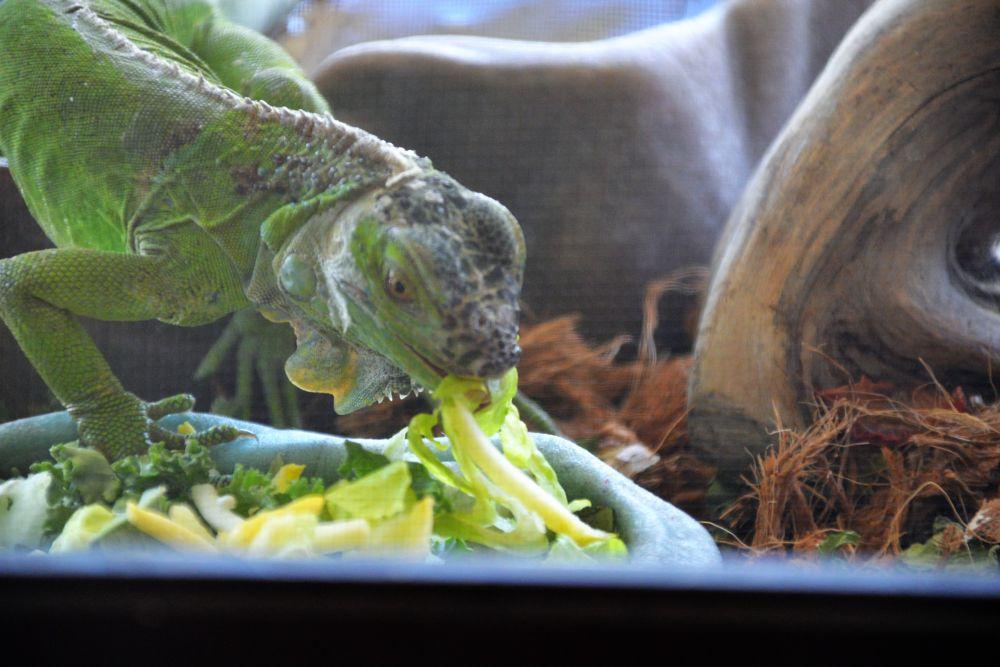 Photo in Animal #iguanas #animals