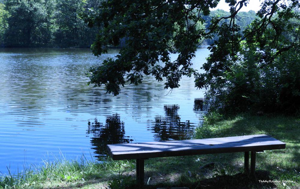 Photo in Random #summer #pond #lake #water #park #bench #nature #outdoor #teddyrosalie studio