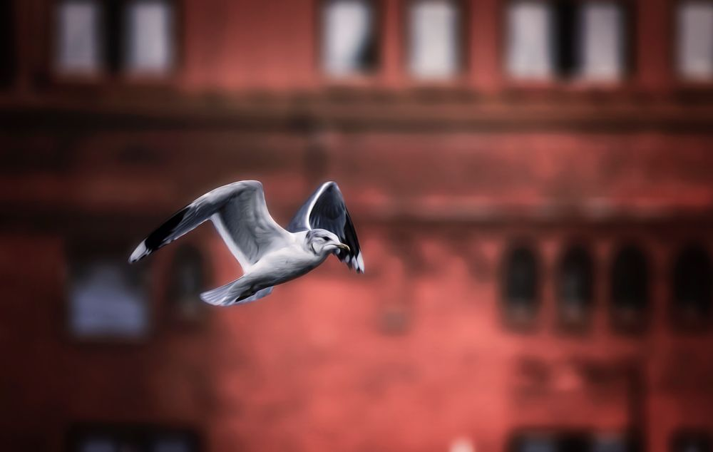 Photo in Animal #seagull #flying #wings #bird #house #motion #animal