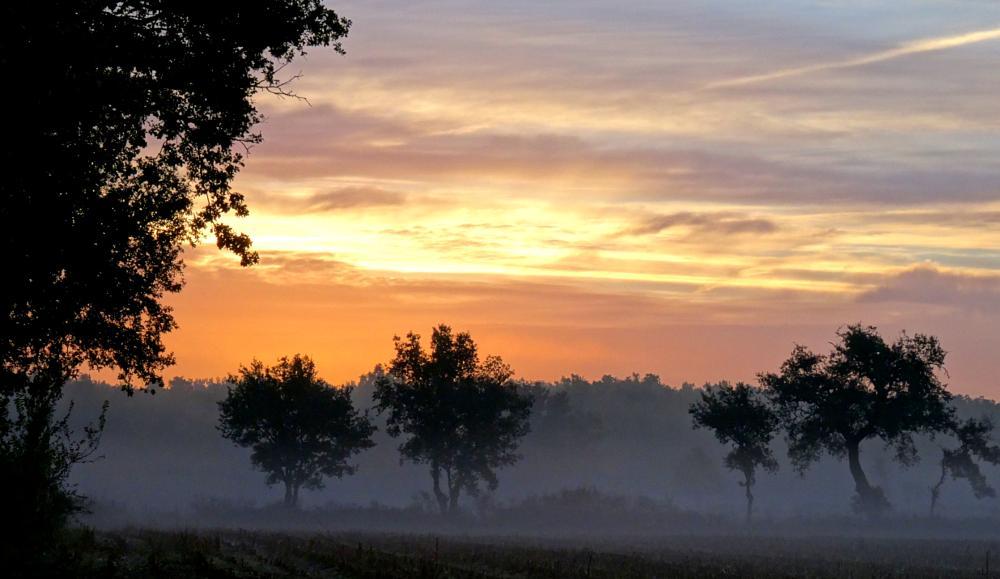 Photo in Nature #brume #arbre #levée de soleil