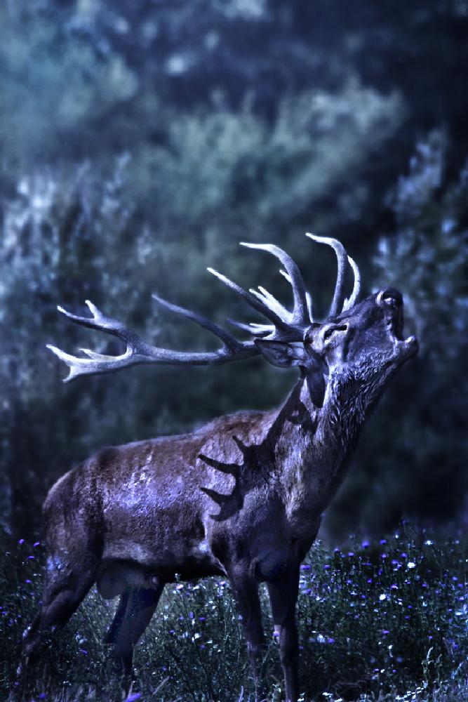 Photo in Animal #animals #wildlife #nature