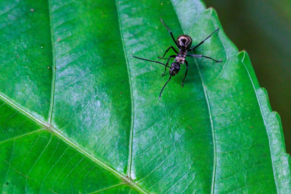 Photo in Macro #ants #nature #macro
