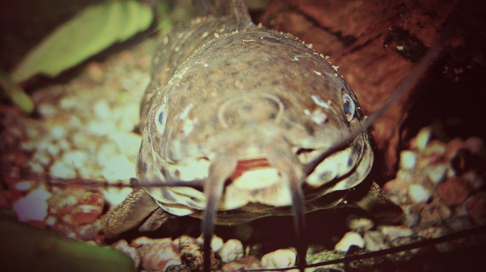 Photo in Animal #a fish #fish #sea #aquarium #animals