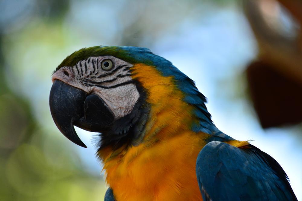 Photo in Nature #arara #arara caninde #foz do iguacu #parque das aves #brasil #brazil