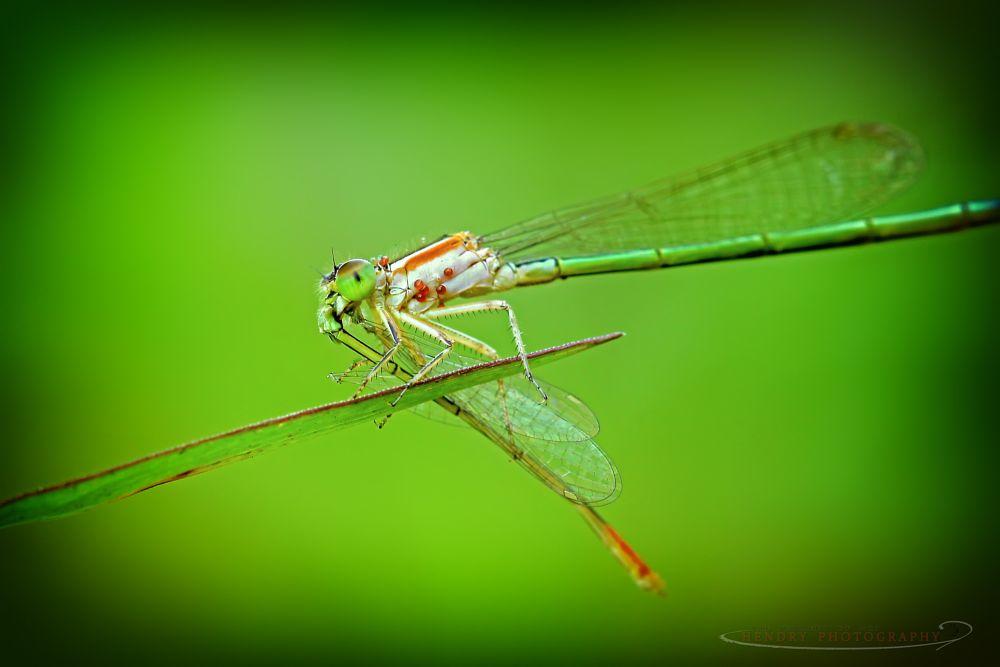Photo in Macro #macro #animal #insect