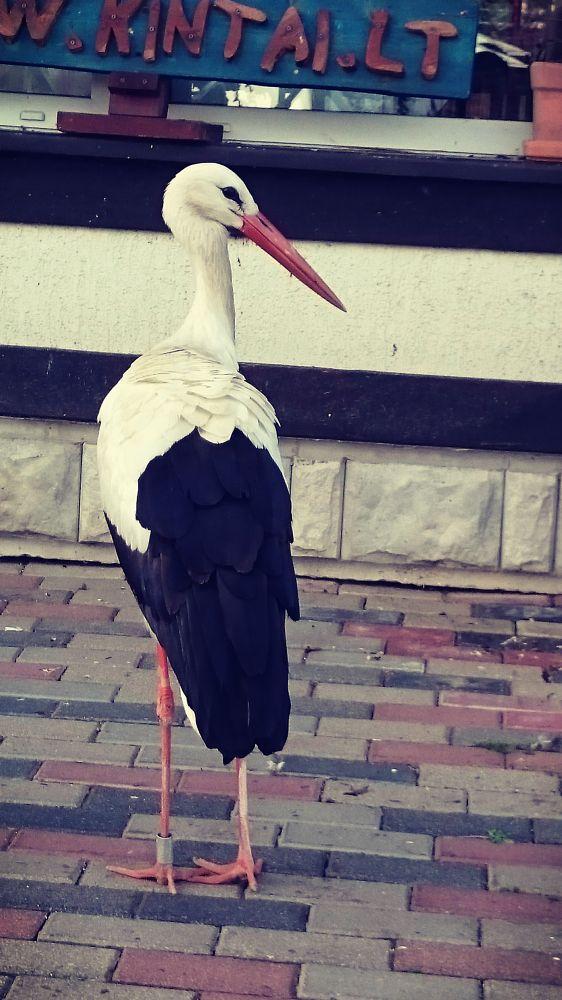 Photo in Animal #stork #summer #model #animal