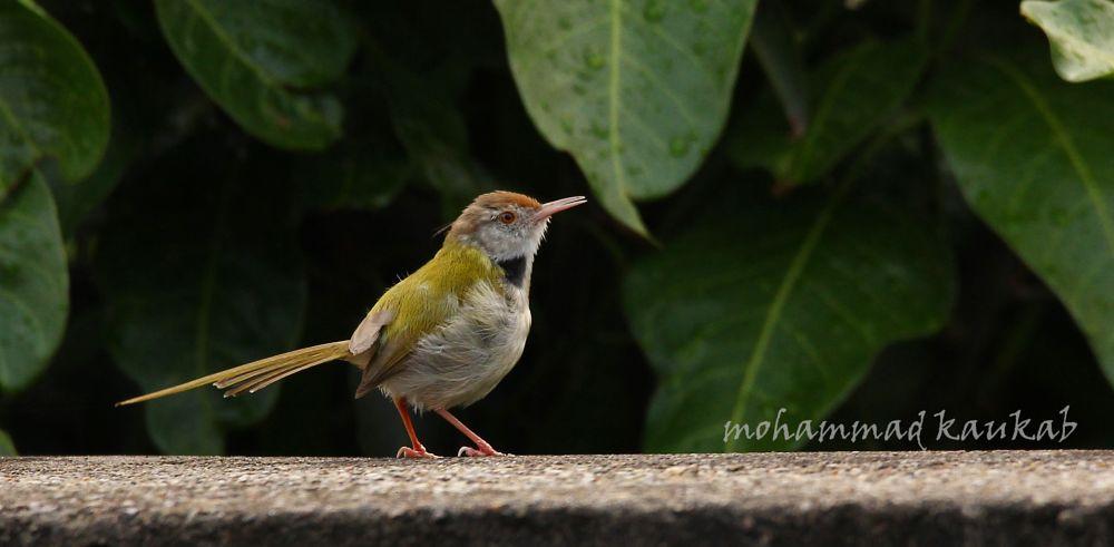 Photo in Animal #wildlife #bird #poise #portrait