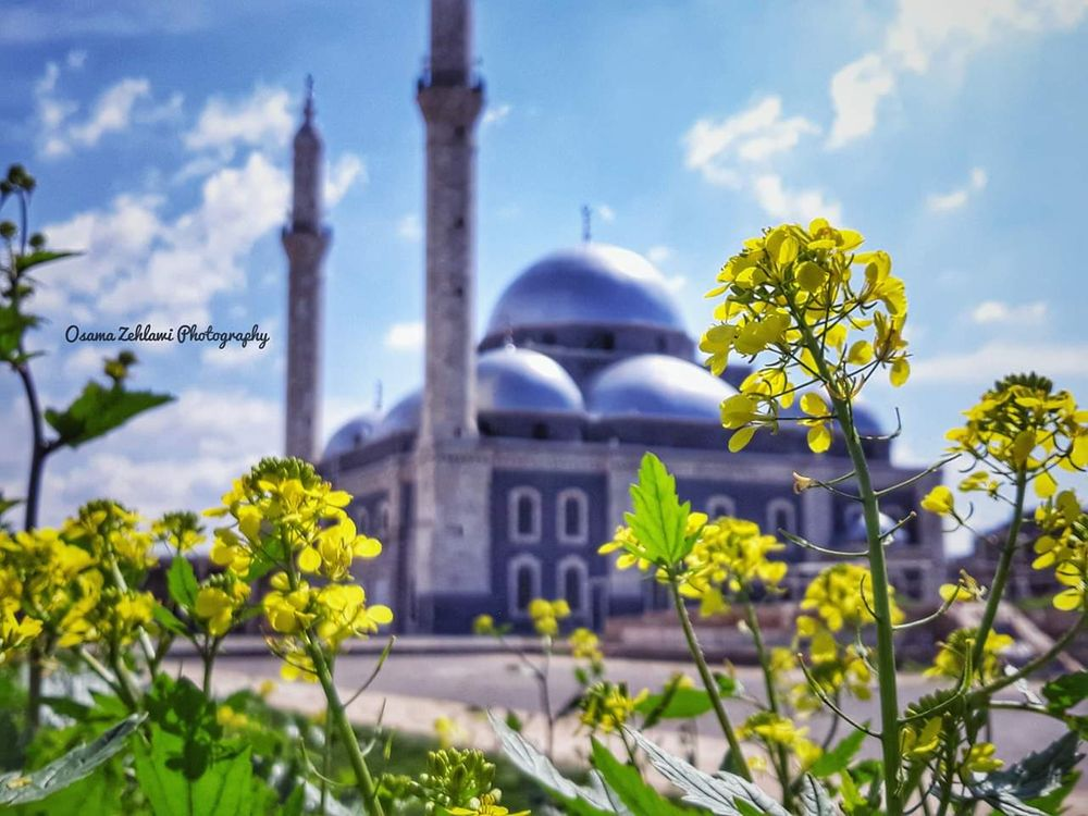 Photo in Nature #syria #homs #khalid bin al waleed mosque #mosque #yellow flowers #yellow #flowers