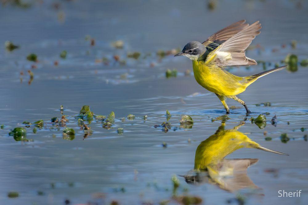 Photo in Animal #bird #birds #nature #wildlife #water #reflection #lake