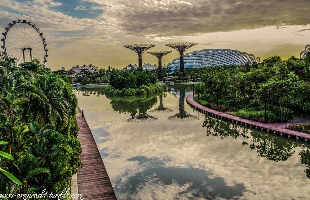 Photo in Landscape #singapore #gardens #photography #morning #clouds #day