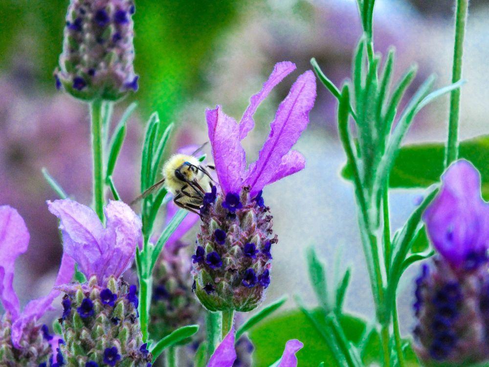 Photo in Animal #bee #flowers #garden
