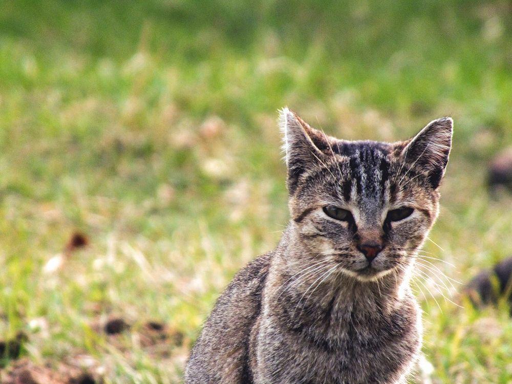 Photo in Animal #cat #cute #farm