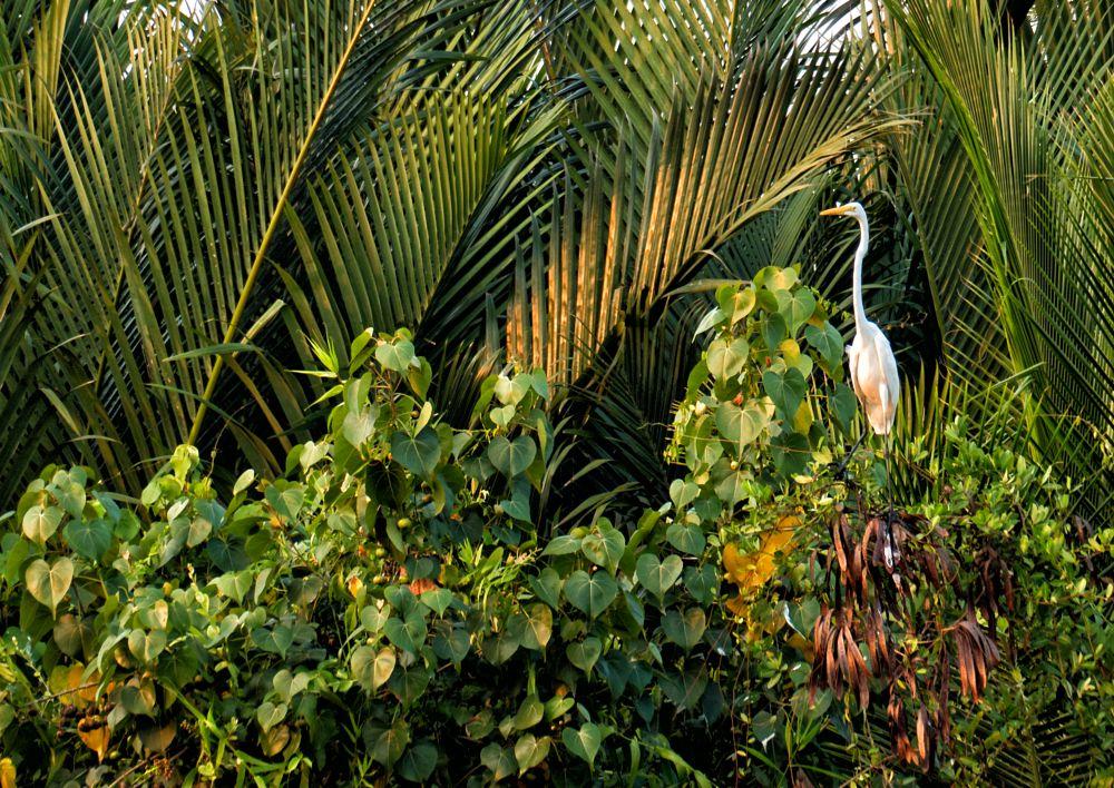 Photo in Animal #bird #wildlife #portrait #heron