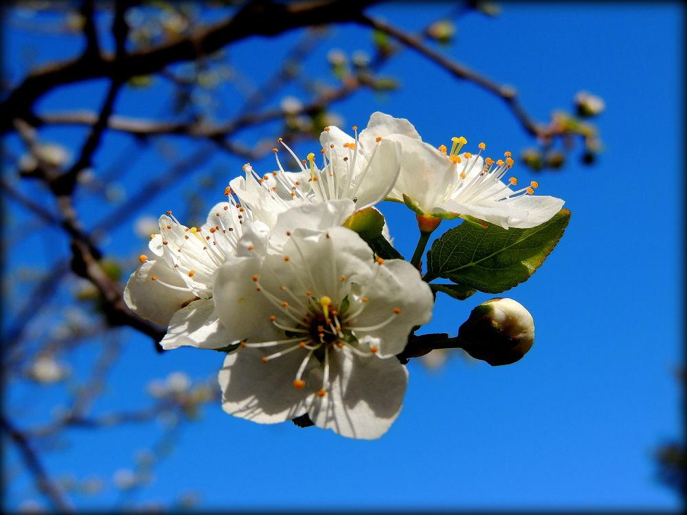 Photo in Random #flores blanco azul torrijos