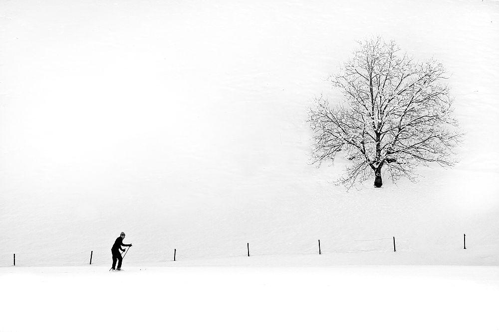 Photo in Black and White #ski #skiing #tree #snow #winter #slovenia