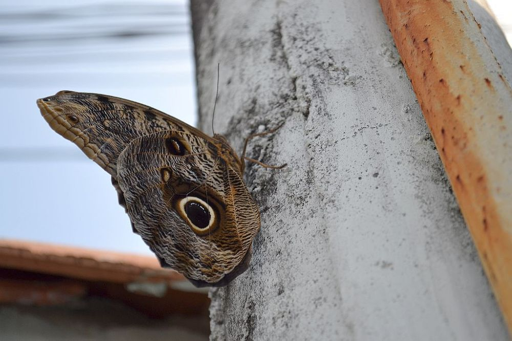 Photo in Animal #butterfly #d3100