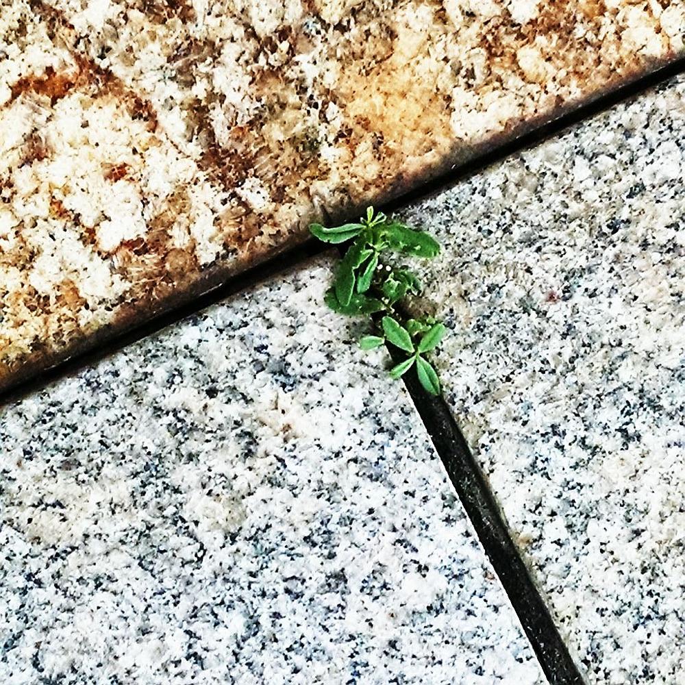 Photo in Nature #planta #vegetal