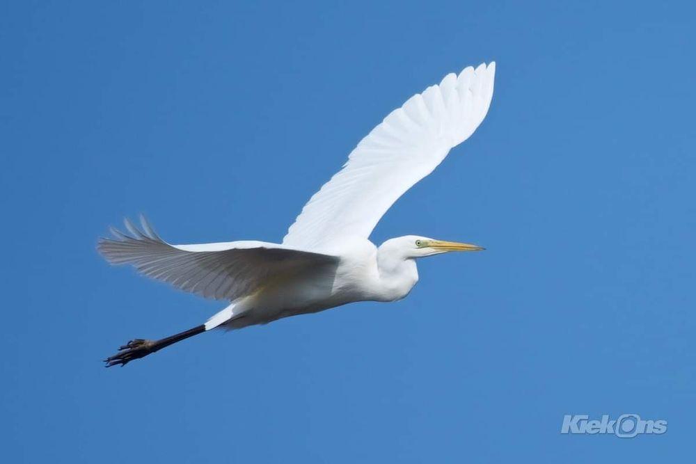 Photo in Animal #bird #nature #wildlife #blue sky