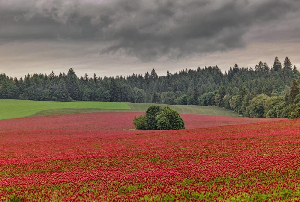 Photo in Landscape #field #flower field #nature #beauty