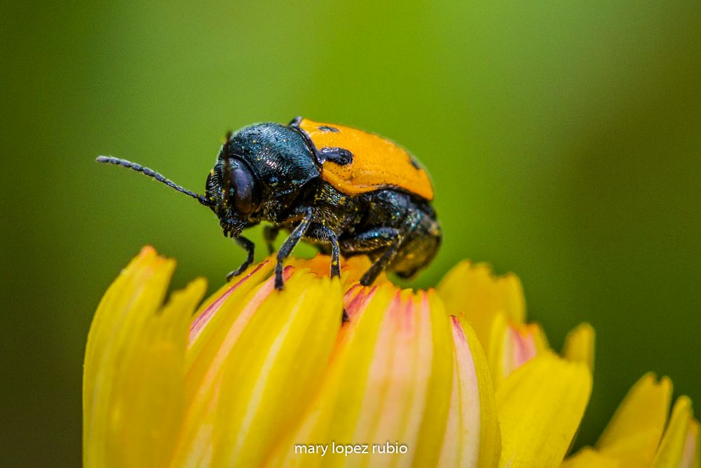 Photo in Random #macro #insects #nature