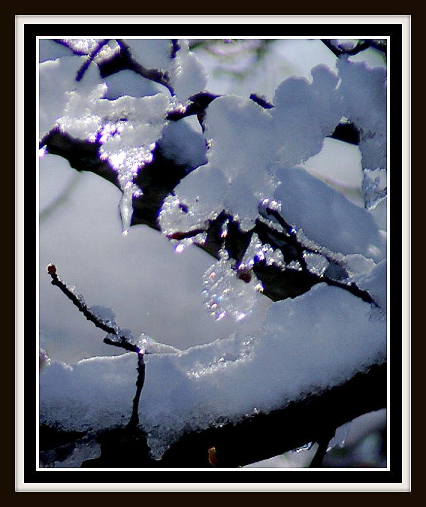 Photo in Random #winter #snow #ice #tree