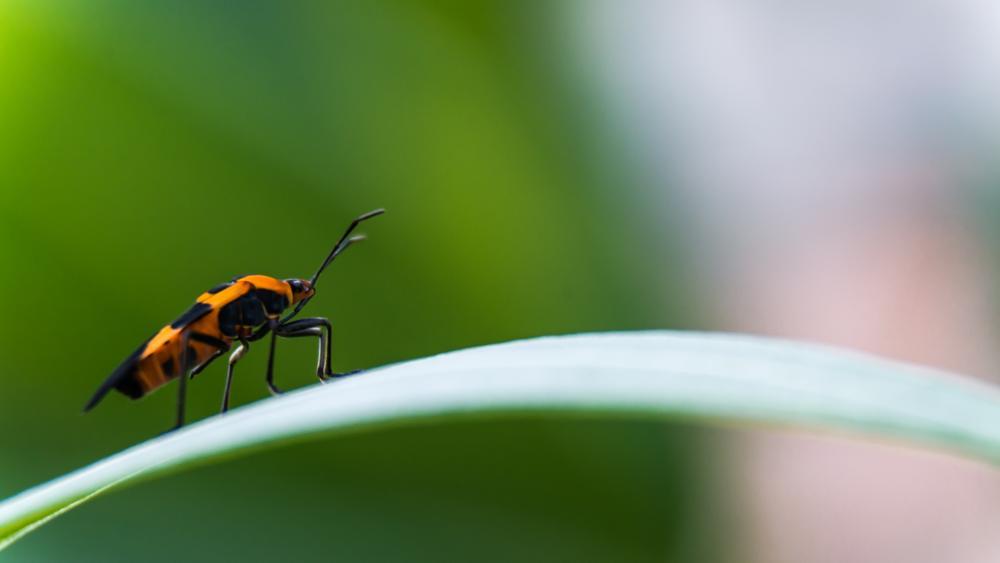 Photo in Macro #macro #milkweed #bugs